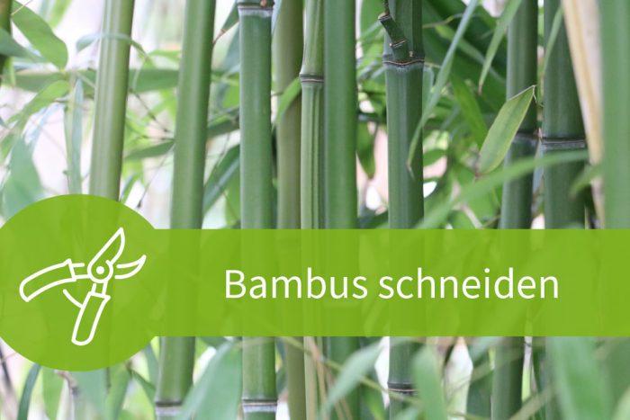Bambus Schneiden 3 Anleitungen Fur 4 Schnittarten
