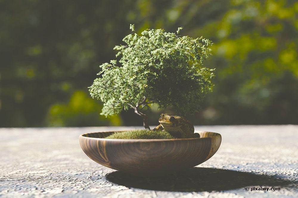 Bonsai Zurückschneiden