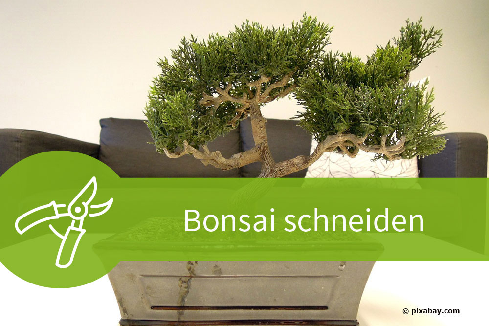 bonsai schneiden mit 6 schnitten zur asiatischen gartenkunst. Black Bedroom Furniture Sets. Home Design Ideas