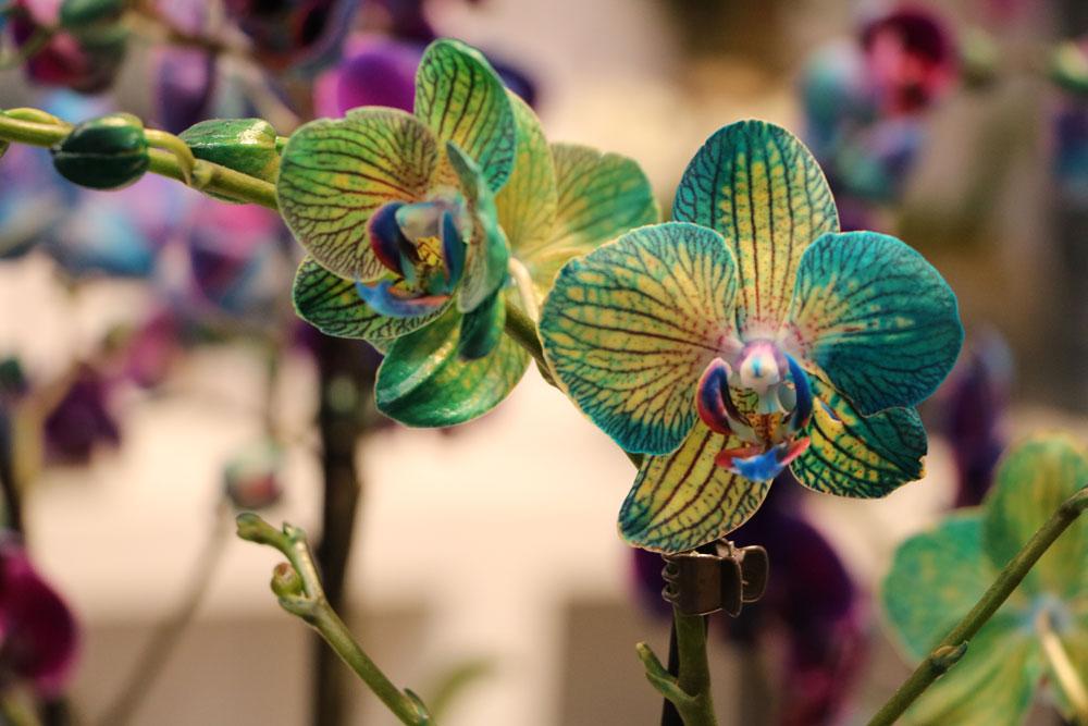 Wann Orchideen schneiden stattfindet lässt sich schwer sagen