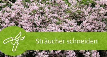 Sträucher schneiden – Anleitungen für das Frühjahr und den Sommer
