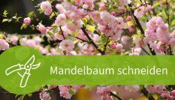 Mandelbaum schneiden