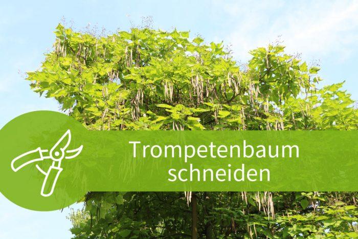 Favorit Trompetenbaum schneiden - Anleitung für alte und junge Bäume SZ42